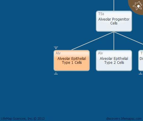 Alveolar Epithelial Type 1 Cells