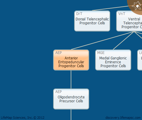 Anterior Entopeduncular Progenitor Cells