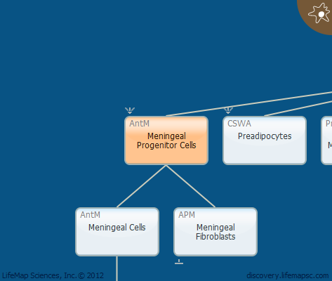 Meningeal Progenitor Cells