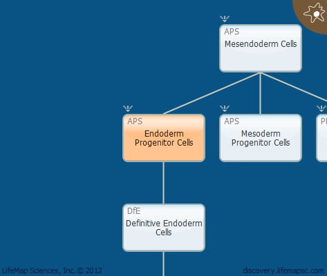 Endoderm Progenitor Cells