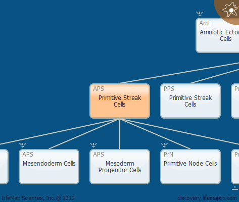 Primitive Streak Cells