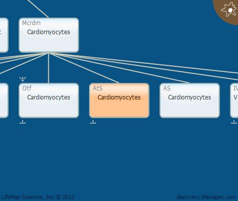 Cardiomyocytes