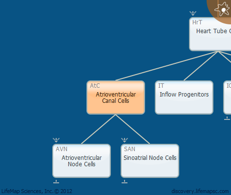 Atrioventricular Canal Cells