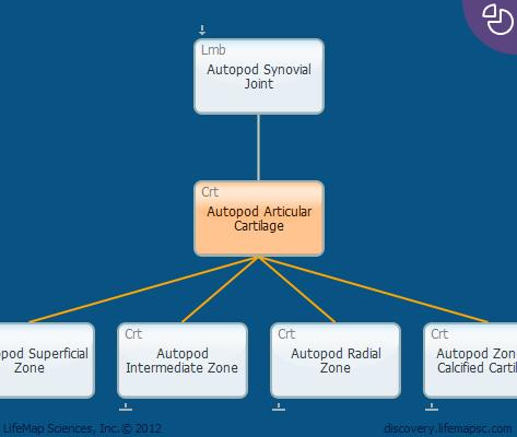 Autopod Articular Cartilage