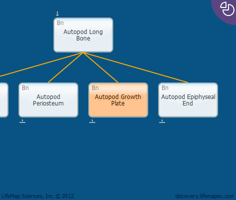 Autopod Growth Plate