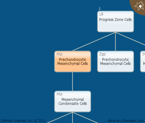 Prechondrocytic Mesenchymal Cells