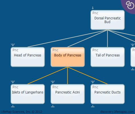Body of Pancreas