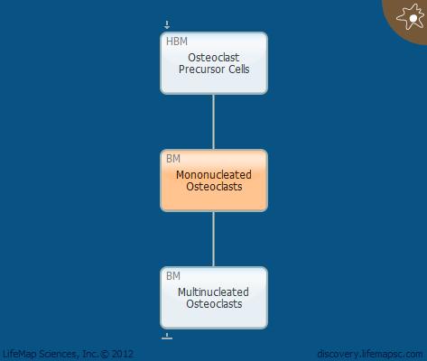 Mononucleated Osteoclasts
