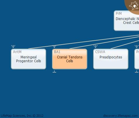 Cranial Tendons Cells
