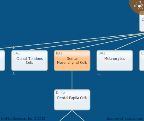 Dental Mesenchymal Cells