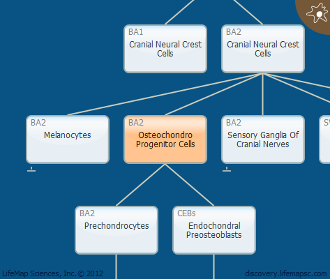 Osteochondro Progenitor Cells