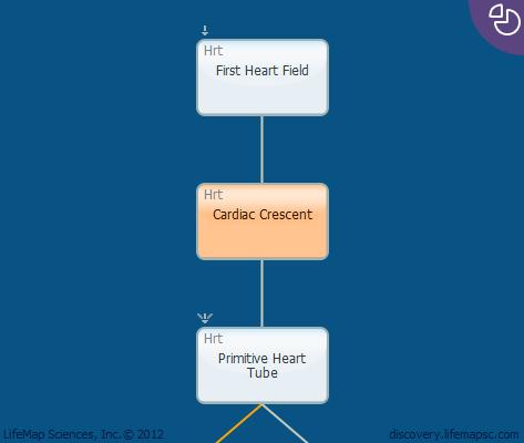Cardiac Crescent