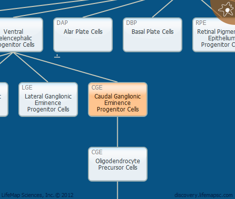 Caudal Ganglionic Eminence Progenitor Cells