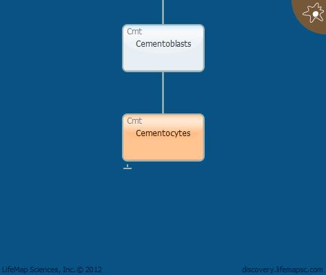 Cementocytes