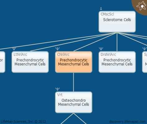Prechondrocytic Mesenchymal Cells