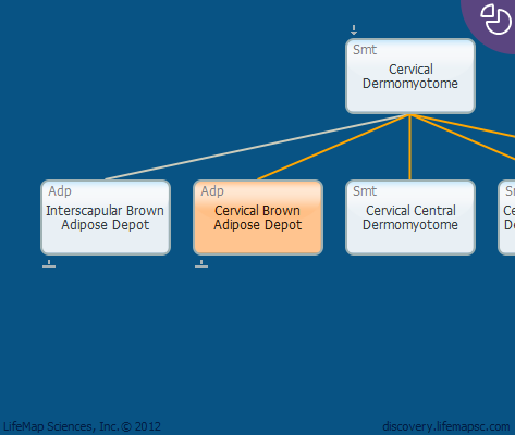 Cervical Brown Adipose Depot