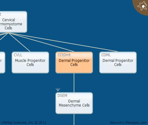 Dermal Progenitor Cells
