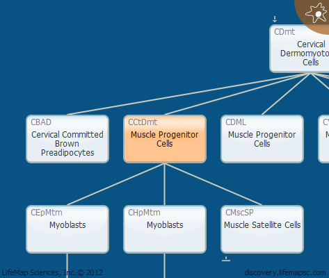 Muscle Progenitor Cells