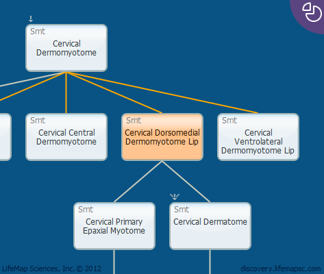 Cervical Dorsomedial Dermomyotome Lip