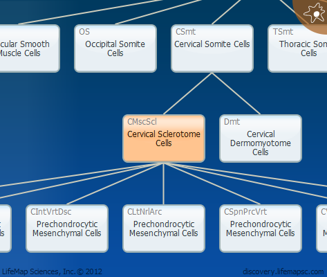 Cervical Sclerotome Cells