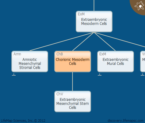 Chorionic Mesoderm Cells