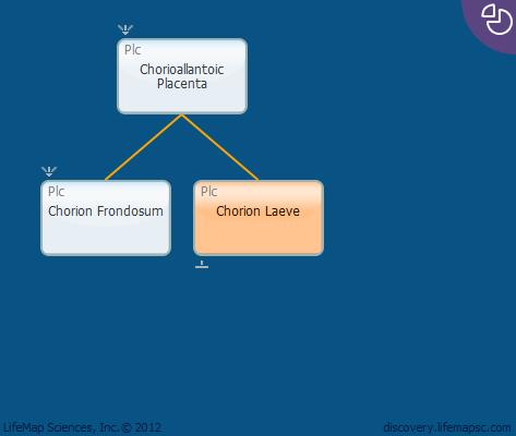 Chorion Laeve