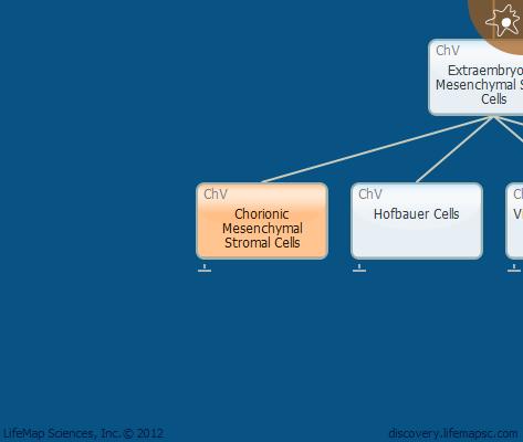 Chorionic Mesenchymal Stromal Cells