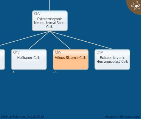 Villous Stromal Cells