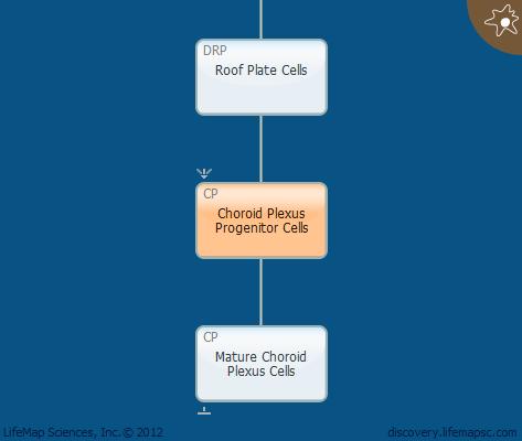 Choroid Plexus Progenitor Cells