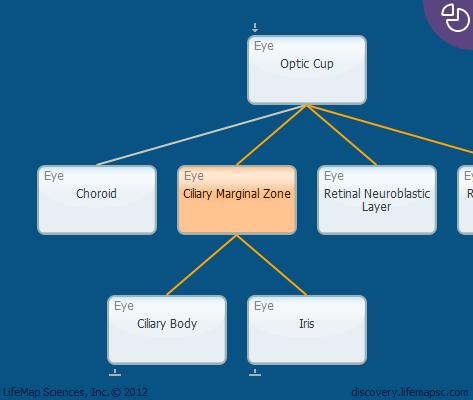 Ciliary Marginal Zone