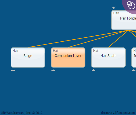 Companion Layer