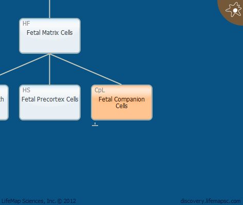 Fetal Companion Cells