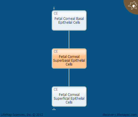 Fetal Corneal Superbasal Epithelial Cells