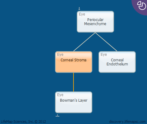 Corneal Stroma