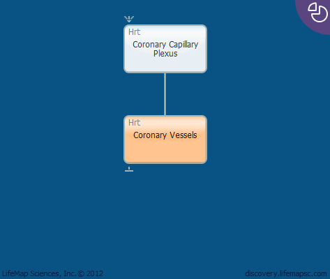 Coronary Vessels