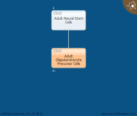 Adult Oligodendrocyte Precursor Cells
