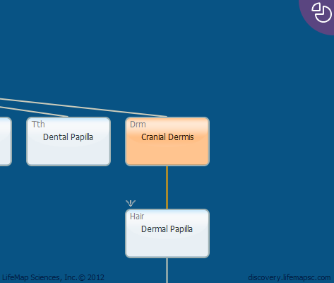 Cranial Dermis