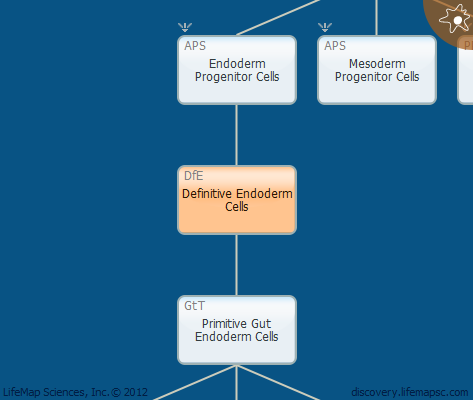 Definitive Endoderm Cells