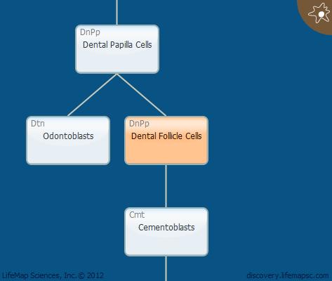 Dental Follicle Cells