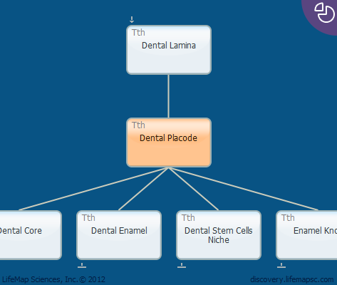 Dental Placode