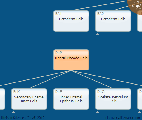 Dental Placode Cells