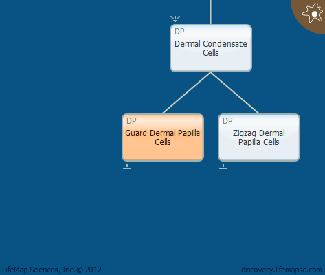 Guard Dermal Papilla Cells