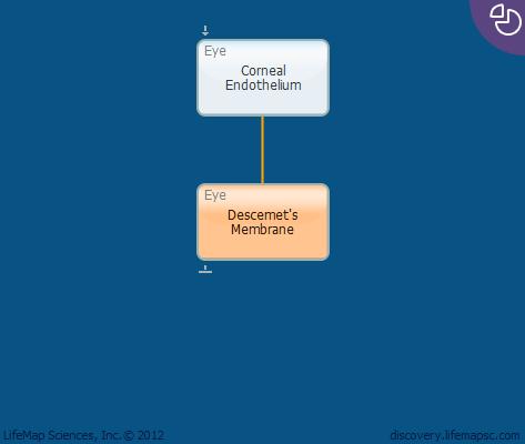Descemet's Membrane