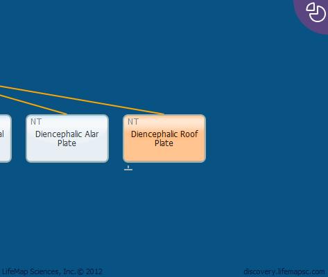 Diencephalic Roof Plate