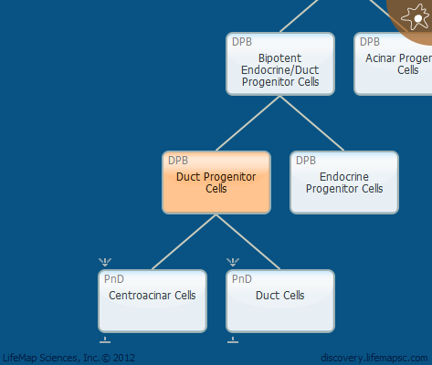 Duct Progenitor Cells