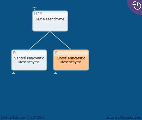 Dorsal Pancreatic Mesenchyme