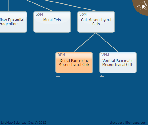 Dorsal Pancreatic Mesenchymal Cells