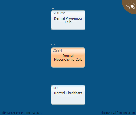 Dermal Mesenchyme Cells