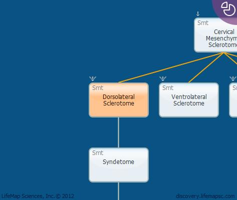 Dorsolateral Sclerotome