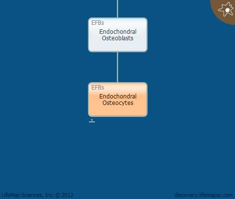 Endochondral Osteocytes